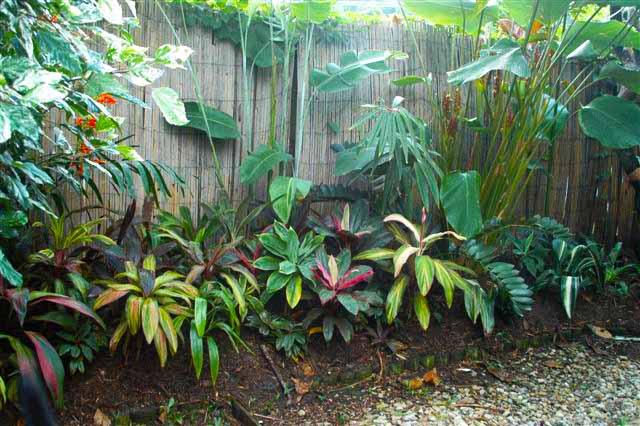 Sean Emma 39 S Tropical Garden Cairns